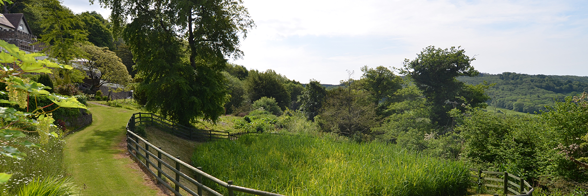 Reed Bed at Caer Llan